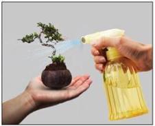 Chăm sóc cây bonsai bay