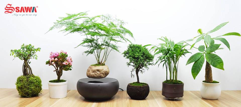 Những chậu Air bonsai đẹp mắt